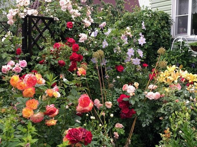 Сад Роз Людмилы Голубевой
