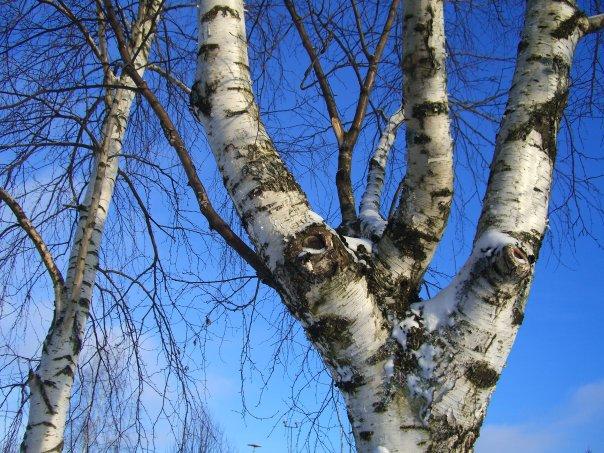 Зима в Карелии 2021
